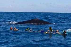Swim_with_whale